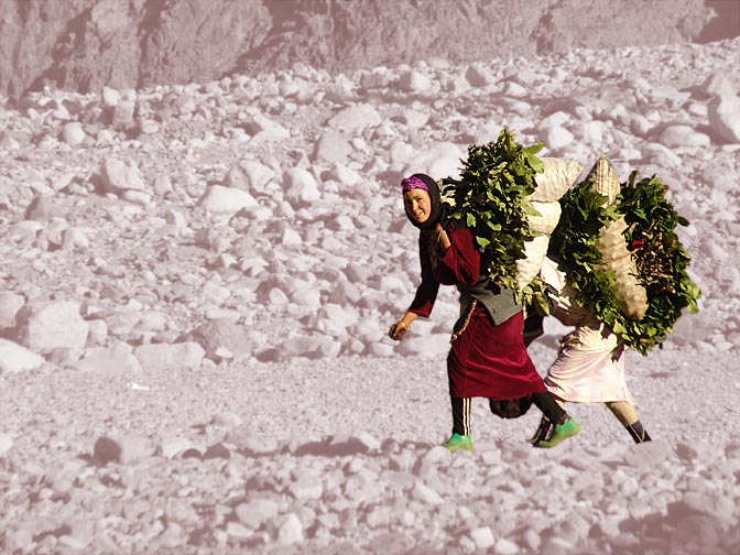 Berber girls carrying green twigs across the Setti Fatma valley, 2007