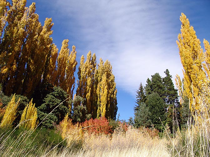 Multicolor autumn foliage, the Neuquen province 2004