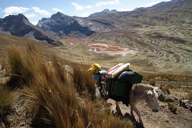 Donkeys carry trekkers' gear along the colorful valley of Caliente River, which drains Lake Pucacocha, 2008