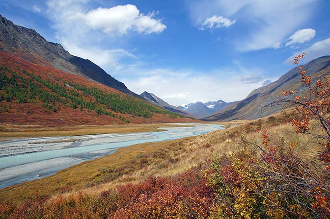Autumn colors adorn the slopes of the Altai ridge upstream the White River (Tsagaan Gol), 2014