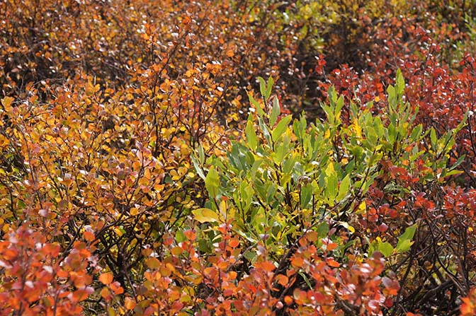 Multicolored autumn foliage along the ascent to the Tsagaan Hairhan Uul mountain pass, 2014