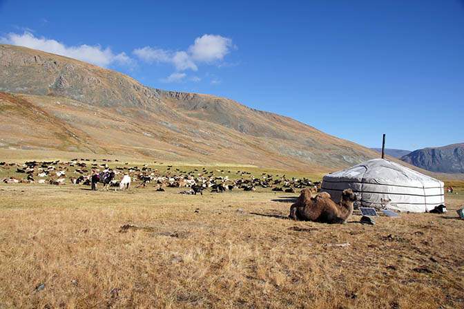 A nomadic Tuvan family's ger with livestock in the foothills of Shiveet Hairhan mountain, 2014