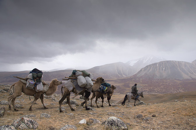 The camels laden with trekkers' equipment on a gloomy day, 2014
