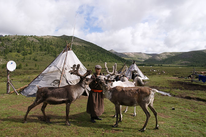 Reindeer lick salt from the hands of the Tsaatan Community Shaman in the East Taiga, North Mongolia 2010