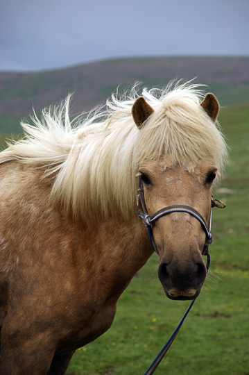 A beautiful horse in Orkhon Valley, Central Mongolia 2010