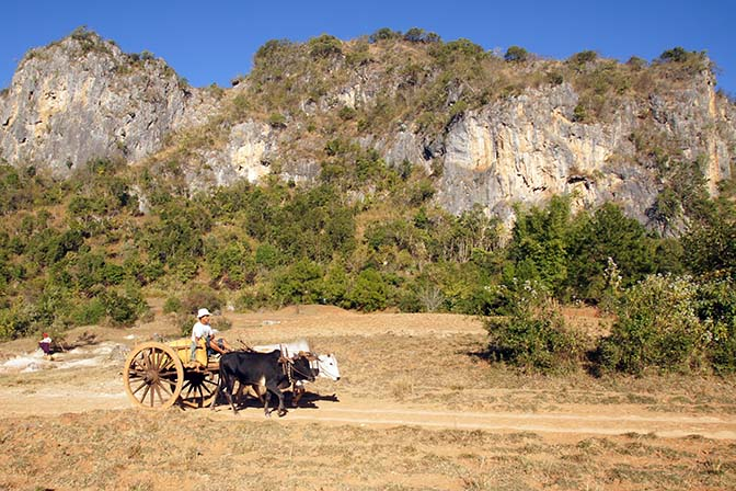 Oxcart in agricultural landscape, Kalaw to Inle Lake trek 2015