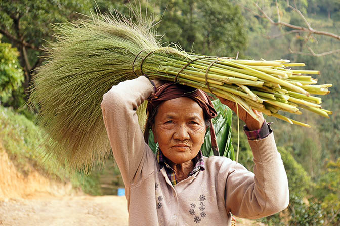 A woman carries blossoms for producing brooms, Trek around Hsipaw 2016