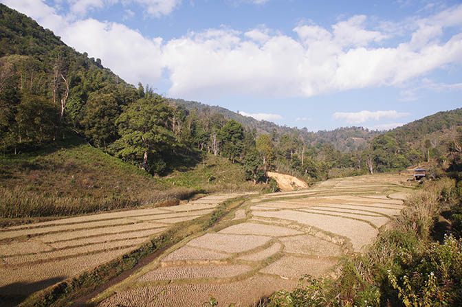 Rice terraces after Harvest in the riverbed, Trek around Hsipaw 2016