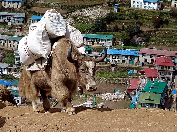 A loaded yak in Namche Bazaar, 2004