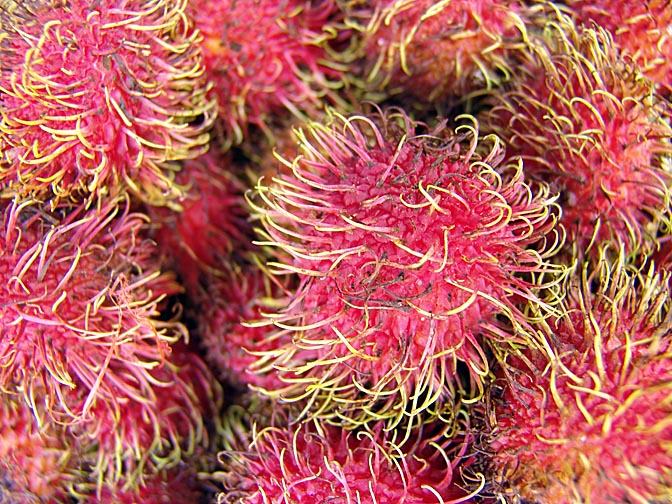 Rambutan fruits (Nephelium lappaceum) on the way to Luang Prabang, Laos 2007