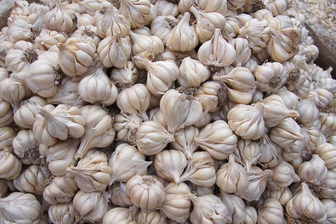 Garlic (Allium sativum) in Paharganj market, Delhi 2011