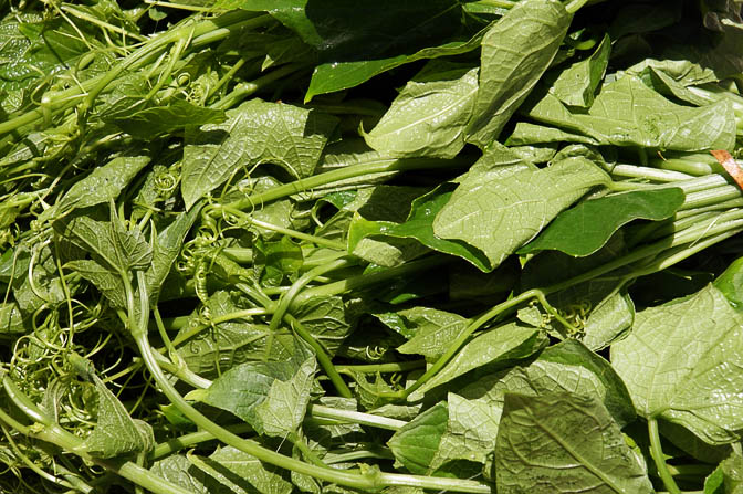 Choko leaves (Sechium edule, Chayote) in Goroka market, Papua New Guinea 2009