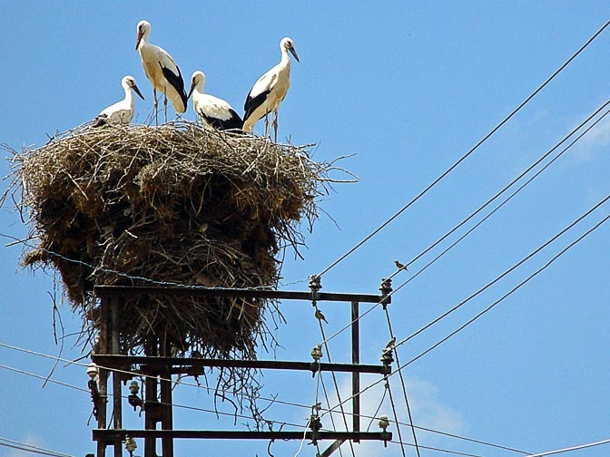 A storks' nest at the top of a pylon, in the Kure Mountains south of the Black Sea, Turkey 2003