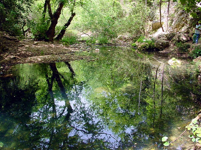A beautiful reflection of the wilderness in the Keziv Creek, The Upper Galilee 2001
