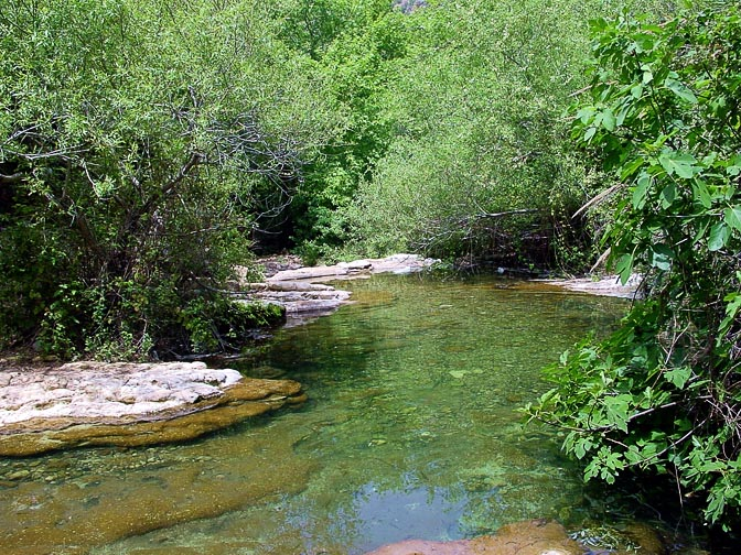 The thicket with a stream in the Keziv Creek, The Upper Galilee 2001
