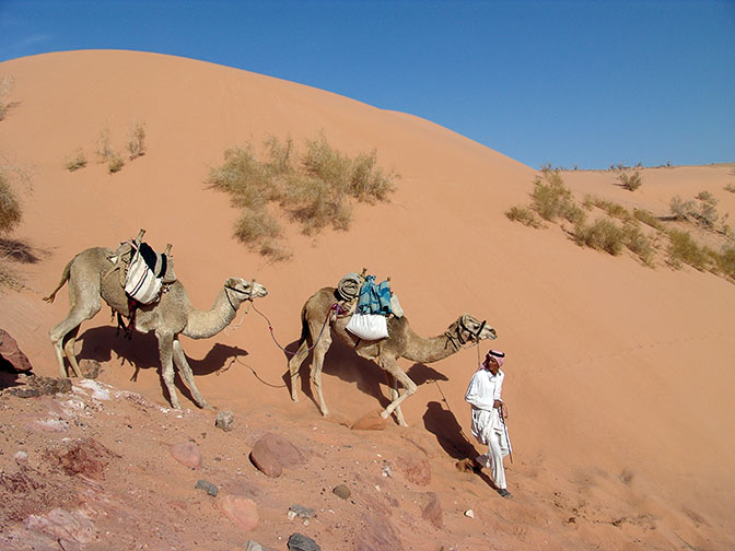 Slim leads the camels down the big dune, Wadi er Raqiya 2006