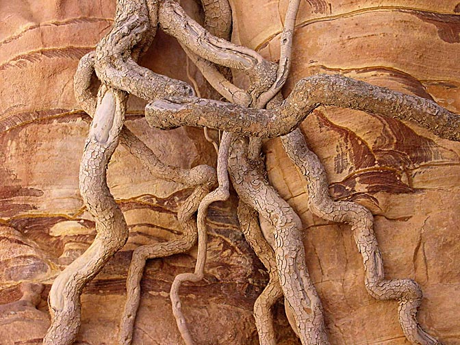 Exposed roots on a colorful sandstone formation in Wadi Feid, 2000