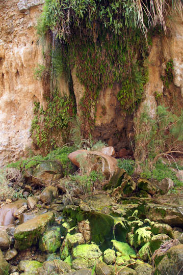 The dripping walls water the top Adiantum capillus-veneris ferns and bottom mosses, 2014