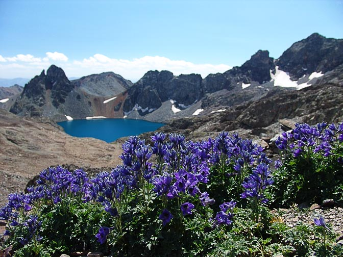 Blue flowers with the Deniz Golu lake in the background, on the descent from the Kachkar peak, 2005