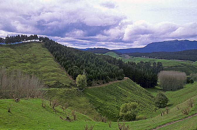 The landscape north to lake Taupo, the North Island 1999