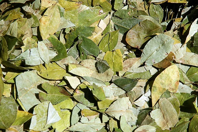The ubiquitous coca leaves on sale at the market, Cusco 2008
