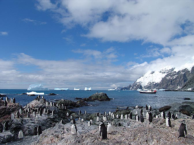 A Chinstrap Penguin (Pygoscelis antarctica) colony in the Shackleton rescue bay, Elephant Island 2004