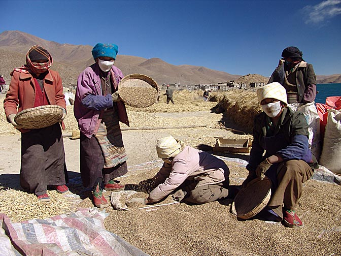 Barley winnowing by Yamdrok Tsho, 2004