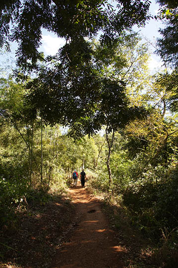 The footpath in the jungle, Kalaw to Inle Lake trek 2015