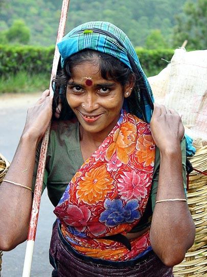 A Tamil woman carrying picked tea leaves to the factory around Nuwara Eliya, 2002