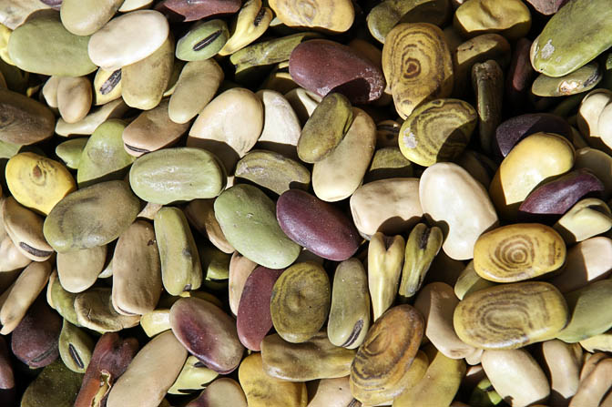 Shelled green broad beans (Vicia faba) in Cusco market, Peru, 2008
