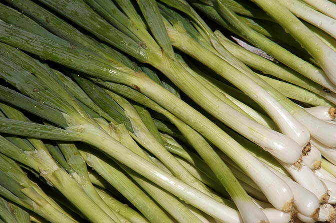 Scallions (Spring Onion) in Goroka market, Papua New Guinea 2009