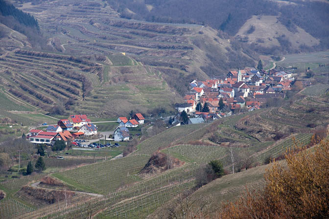 Schelingen surrounded by vineyards from Badberg ,Kaiserstuhl 2013