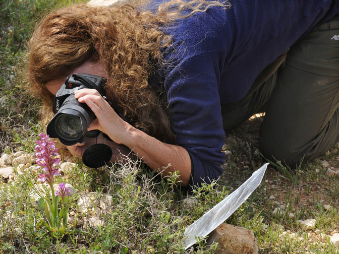 Myself taking a picture of a Pink Butterfly Orchid (Orchis papilionacea) in the Judean Mountains, 2010 (photographed by Amikam Shoob)