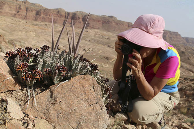 I shoot a Caralluma tuberculata in Jabal Umm Asaawer, 2018 (photographed by Boaz Langford)