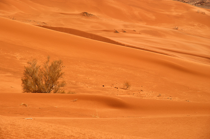 The orange sand dunes of Wadi er Raqiya, 2011