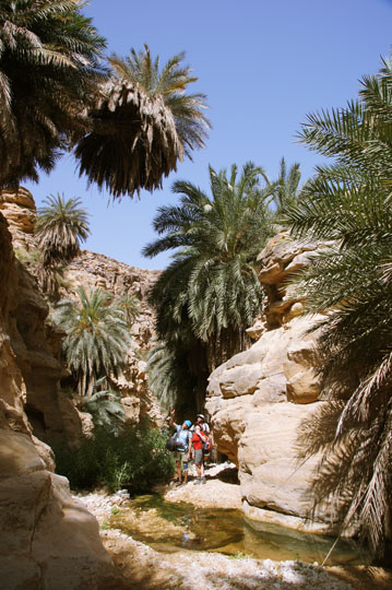 The guys admire the full grown palmtrees decorating the walls of Wadi Manshala, 2012